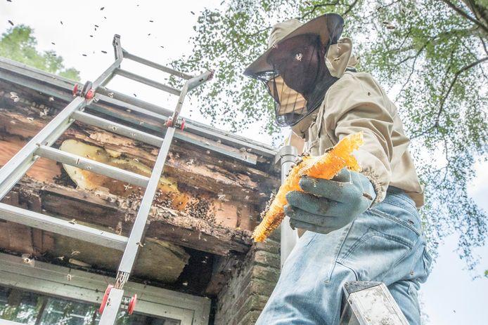 Imker Chris Bouwman liet enkele weken terug de honing zien die uit de raat stroomde toen hij het bijennest verwijderde.