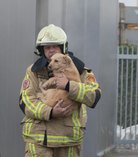 Brand bij Plus Isolatie in Rijssen; twee honden gered