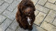 Instituut Bert Carlier heeft een schoolhond om leerlingen tot rust te brengen