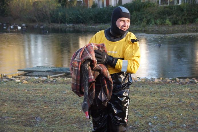Opluchting bij deze brandweerman nadat de zwaan uit het ijs is gered.