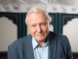 """PORTRET. David Attenborough (94), hét boegbeeld van de natuur: """"Ik zal niet meer meemaken hoe we de aarde kunnen redden"""""""