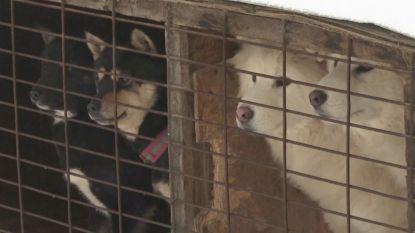 Olympiër bezoekt hondenvleesboerderij in Zuid-Korea