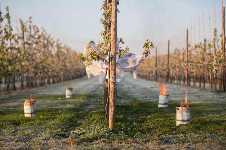 De nachtvorst van april en de droogte van juni worden erkend als nationale landbouwramp. De getroffen fruittelers en landbouwers konden  via het Landbouwrampenfonds een deel van hun verlies recupereren. In Sint-Truiden zijn er  237 personen die hier aanspraak op maakten.
