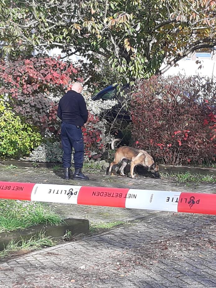 Een speurhond op de locatie van de schietpartij in Helmond.