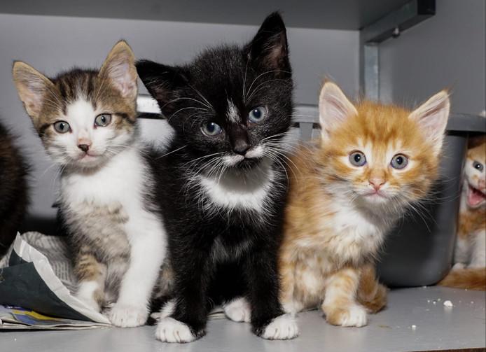 Kittens wachten op een nieuw baasje bij Stichting Zwerfkatten.