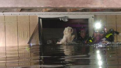 Hondje gered dat week op sofa dobberde na orkaan Florence