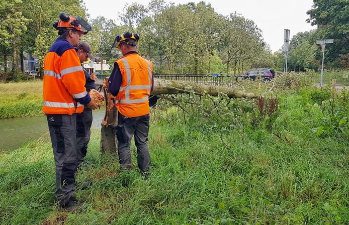 Vanmorgen omstreeks 11:30 brak er een boom af door de harde wind aan de Groenstraat in Oisterwijk.