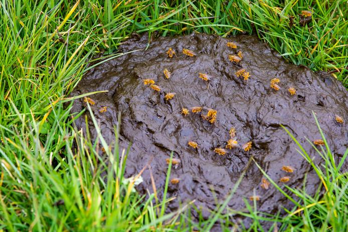 Er zijn meldingen binnengekomen van huisbazen die mest in de tuin van hun huurders dumpten.