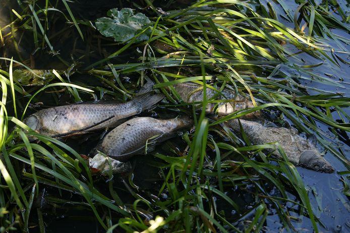 Vervuild water zorgt voor sterfte onder vissen en andere flora en fauna.