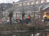 Kaalslag aan de Piushaven: 'Alsof de gemeente bang is voor wild groen'