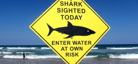 Man ziet hoe vriend op surfplank door haai wordt aangevallen
