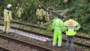 Ontwortelde boom valt op bovenleiding: urenlang geen treinverkeer