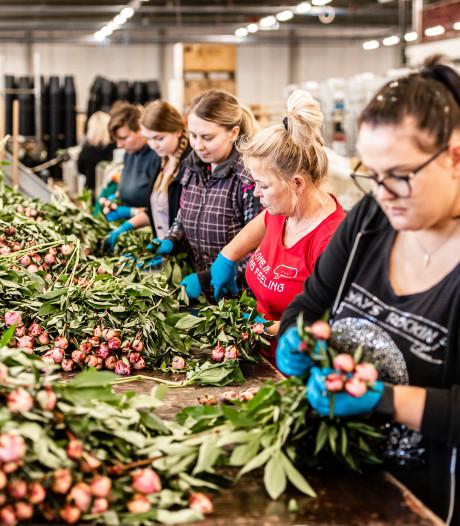 Aantal arbeidsmigranten in Roosendaal? We weten het volgens de VLP niet