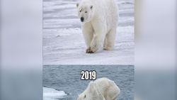 VIDEO. Ten Year Challenge toont ook gevolgen van klimaatopwarming