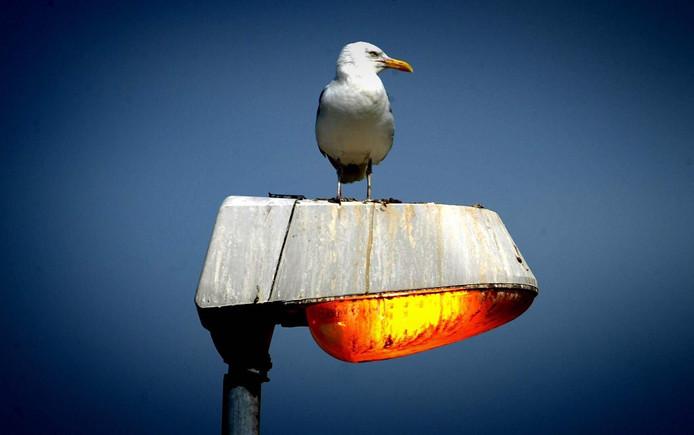 Lantaarnpalen met sensoren moeten voorkomen dat het Zuiderbos onnodig wordt verlicht. ANP FOTO/ROBIN UTRECHT