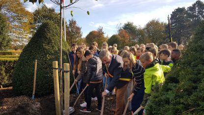 Leerlingen planten vredesboom op erekerkhof