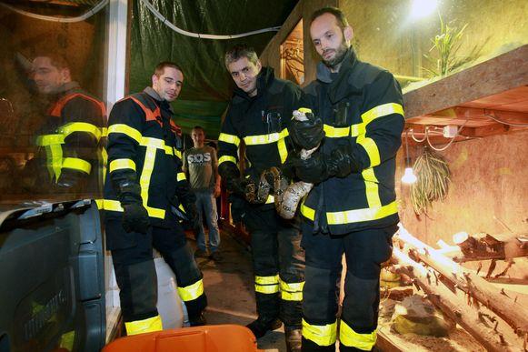 De brandweermannen houden de boa voorzichtig vast.