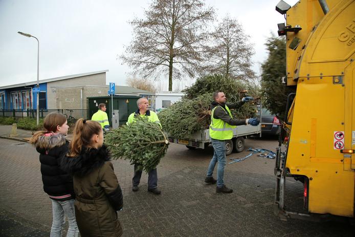 De kerstboominzameling van de gemeente Oudewater in Oudewater en Hekendorp leverde ruim 1200 afgedankte sparren op.