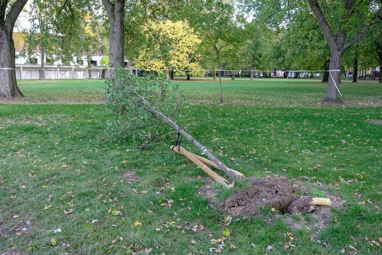 Een viertal pas aangeplante boompjes moesten eraan geloven.