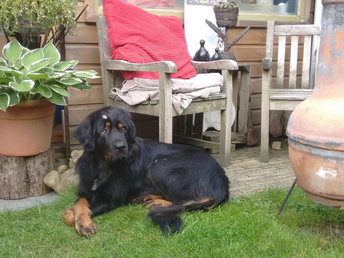 Hond Luna. Het dier is al bijna twee jaar spoorloos.