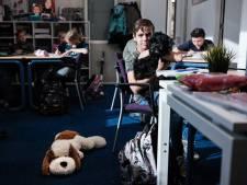Zorgen om schoolhond Teddie: 'Dit is uitermate schadelijk'