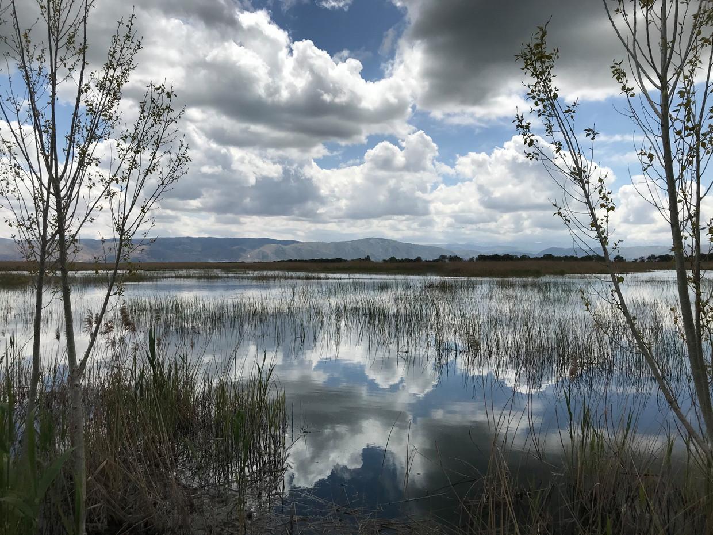 In het moeras van Ammiq in Libanon is de zwarte ibis na negen jaar weer teruggekeerd.