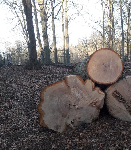 Proces-verbaal raakte zoek: bomenkap bij Villa Vredelust blijft onbestraft