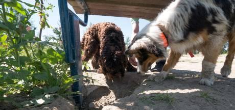 Gemeente: verhuizing van Alphens hondenpark kan echt niet sneller