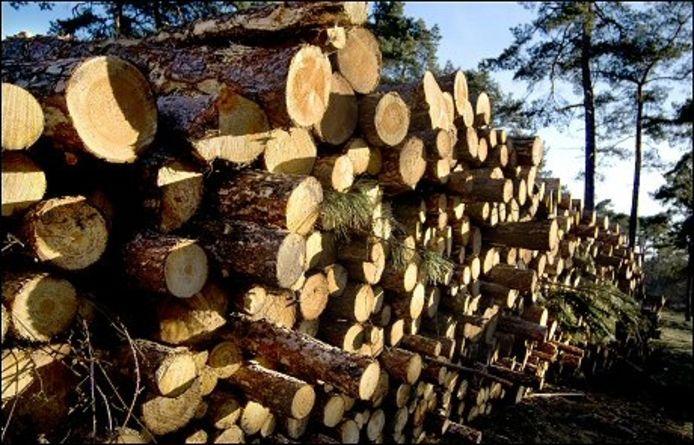 Er zijn veel bomen gekapt in het gebied