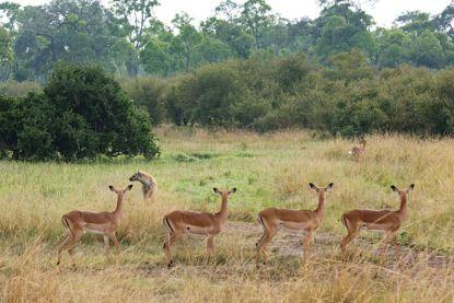 Man (56) uit Hamont-Achel sterft tijdens jachtpartij in Krugerpark