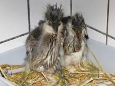 Veel vogels wachten niet op mei met hun ei