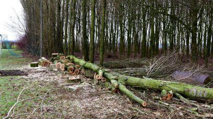 Gemeente bezig met opkuis bosje
