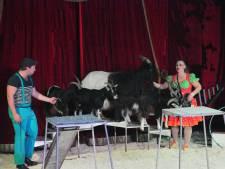 Circus Barani strijkt neer in Raamsdonksveer