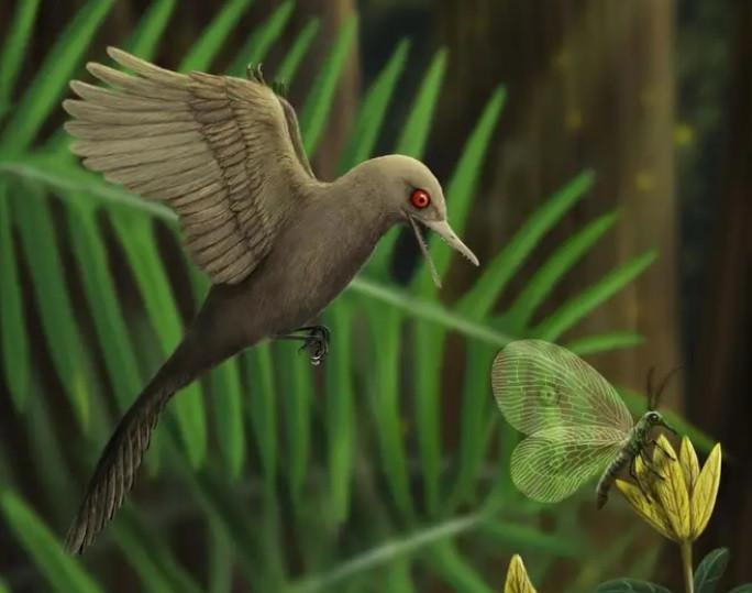 De Oculudentavis khaungraae was ongeveer even groot als een bijkolibrie.