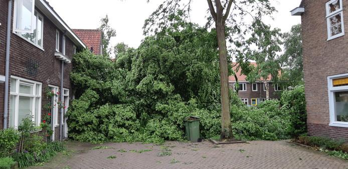 Bevrijdingsboom Lodewijk Houbenstraat