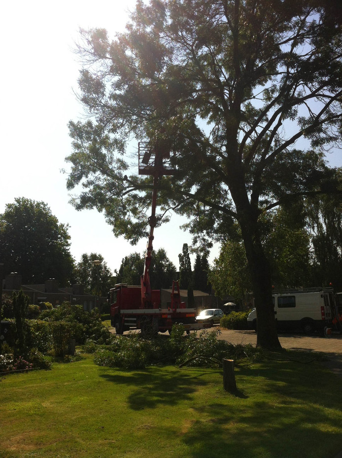 Merkx haalde een vrachtwagen hout uit de boom.
