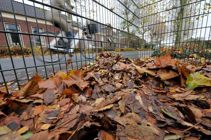 De gemeente Hengelo heeft slechte ervaringen met bladkorven.