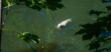 Omstander redt hond uit water in Eindhoven