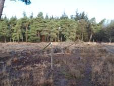 Onbekende zaagt bomen op landgoed Valkenhorst in Heeze om; Brabants Landschap staat voor raadsel