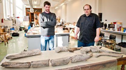 3 miljoen jaar oud skelet uit Antwerpse haven nieuw puzzelstuk in evolutie van walvissen