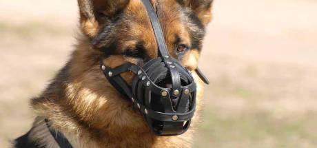 25 agressieve honden in Rotterdam gemuilkorfd