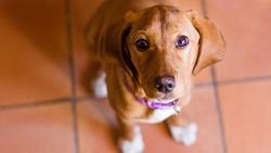 Het is bewezen: Puppyogen zijn allesbehalve toeval