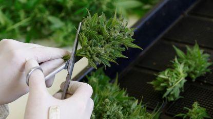 """""""Belgisch cannabisbeleid faalt"""""""