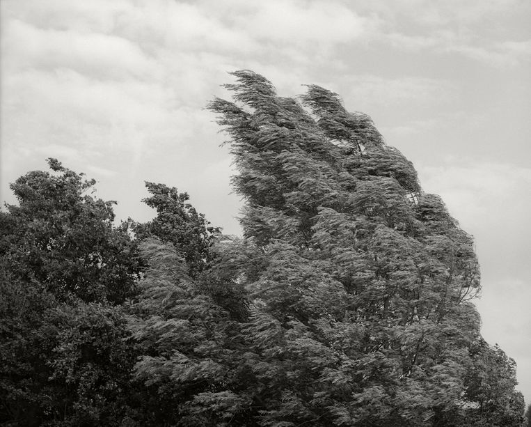 Foto's uit de serie 'can we speak in flowers' van fotografe en dochter Madeleine Kukic-Heijmans. Haar werk wordt internationaal geëxposeerd (zie ook: www.madeleinekukic.com). Beeld null