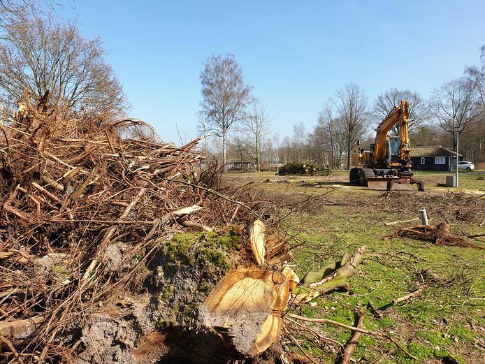 Bomenkap op het recreatiepark De Tolplas, nodig voor een uitbreiding.