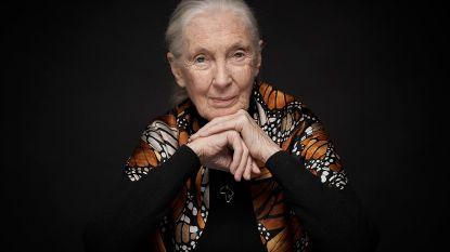 Jane Goodall ontvangt eredoctoraat van UHasselt