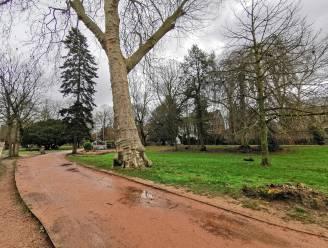 Tientallen bomen in Albertpark worden geveld… nadien volgt grote renovatie