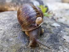Eenzame linksdraaiende slak Jeremy vindt alsnog de liefde en sterft