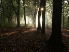 Brabantse boswachters verwachten enorme drukte door (laatste?) zonnig weekend: 'Iedereen wil juist nu de natuur in'