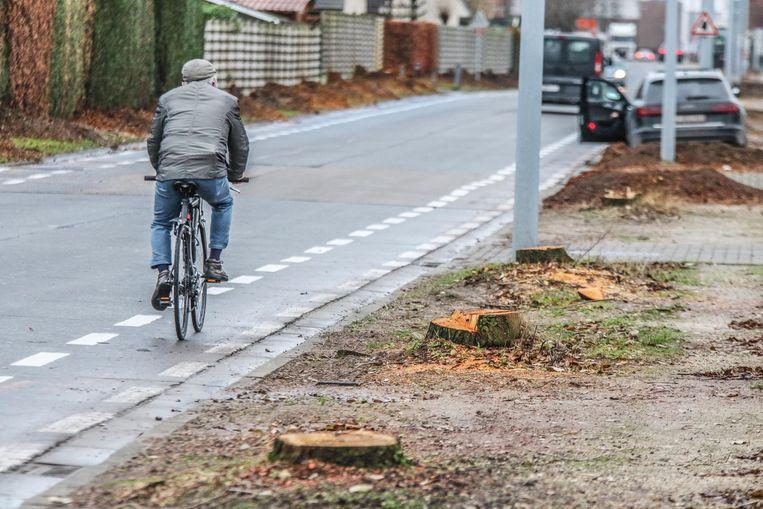 Deze week worden 111 bomen gerooid in de Politieke Gevangenenstraat.